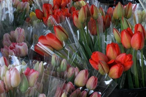 Tulips Alemany FM 0209